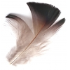 Feather Black Golden Pheasant 3 Gram